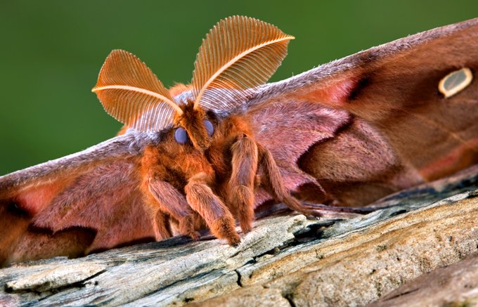 Animal Symbolism Moth Meaning On Whats Your Sign