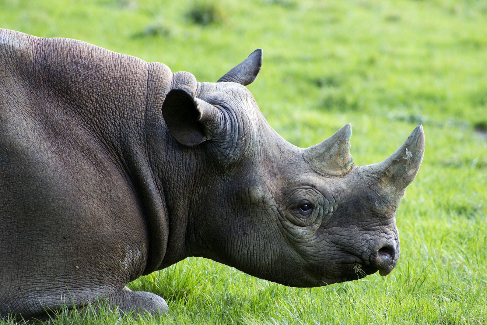 Animal Symbolism Rhinoceros Meaning On Whats Your Sign