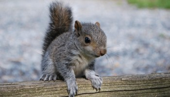 animal symbolism squirrel meaning on whats your sign com