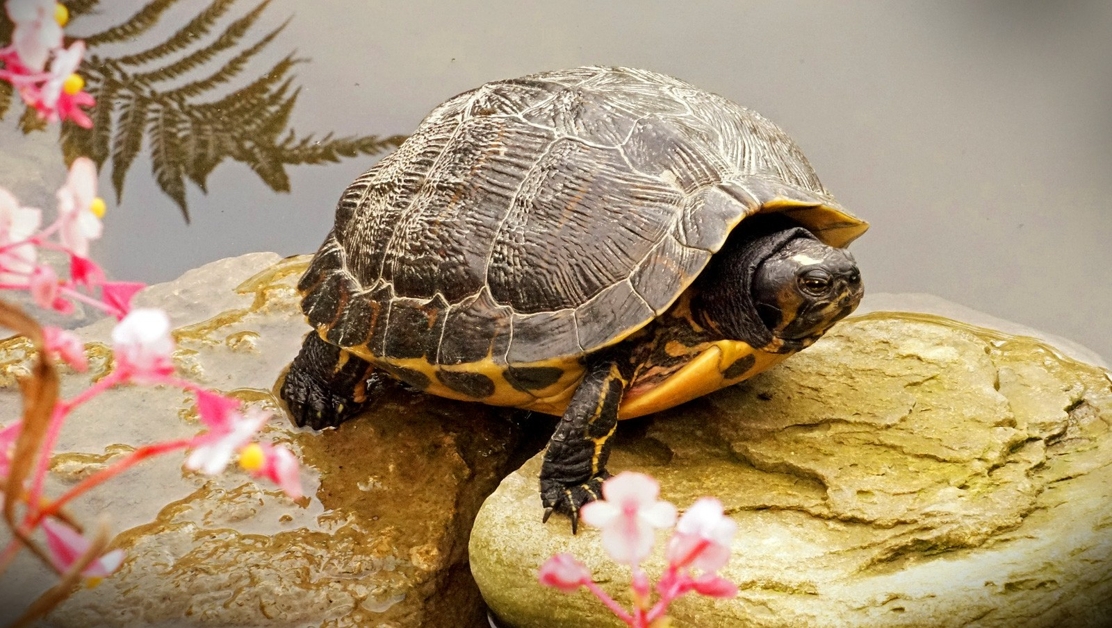 Animal Symbolism: Turtle Meanings on Whats-Your-Sign com