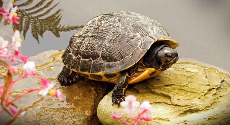 Animal Symbolism Turtle Meanings On Whats Your Sign