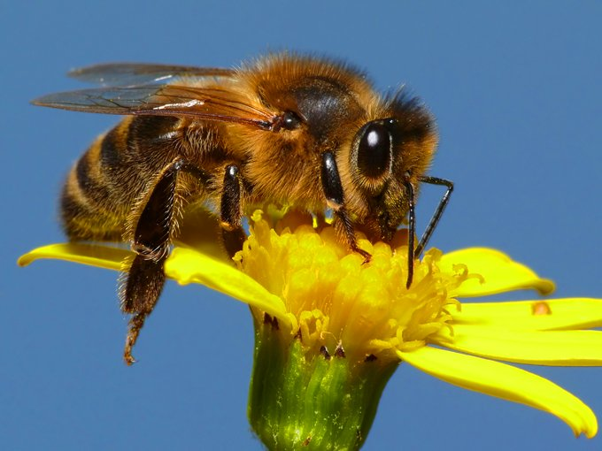 Bee Meaning And Bee Symbolism On Whats Your Sign