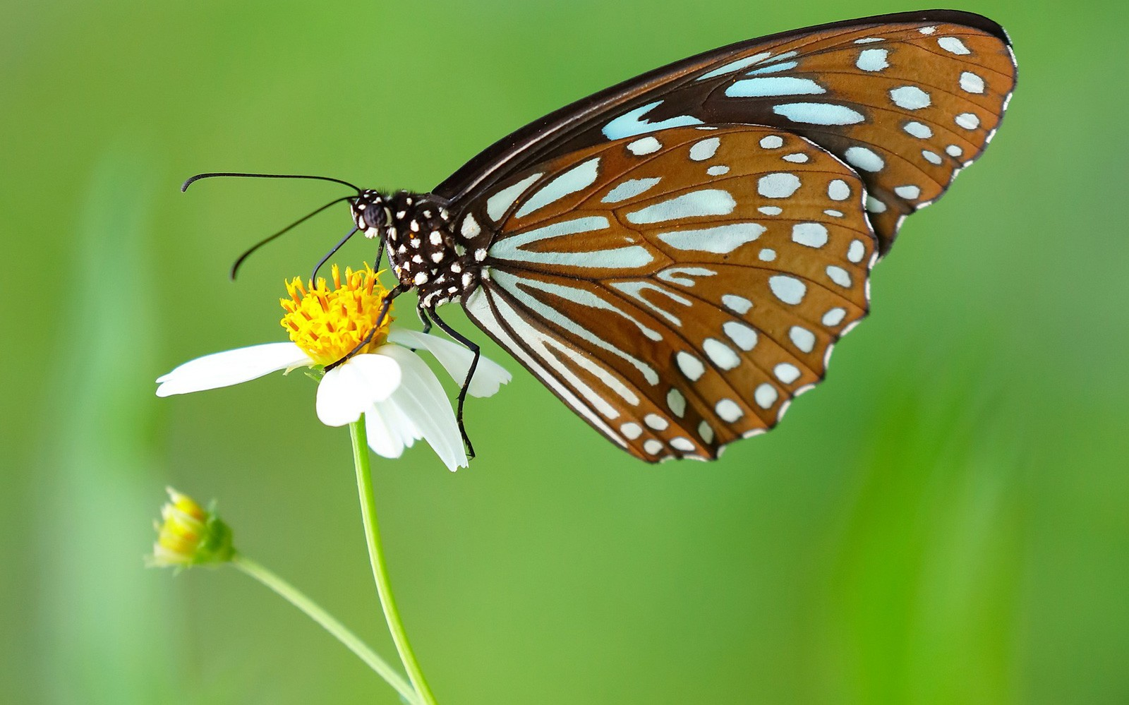 Butterfly Animal Symbolism Butterfly Meaning On Whats Your Sign