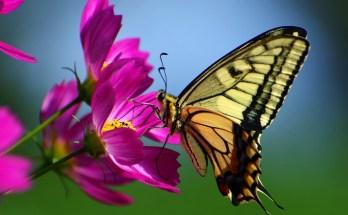 butterfly tattoo ideas butterfly meanings