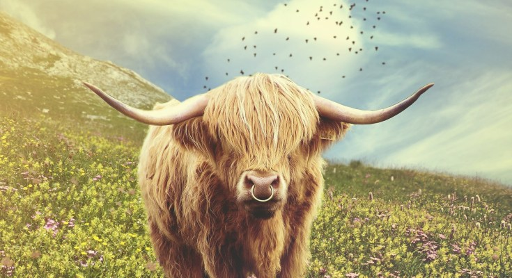 Celtic zodiac sign bull and cow meaning