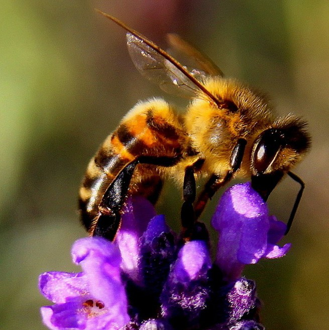 Symbolic Meaning of Bees in Dreams on Whats-Your-Sign
