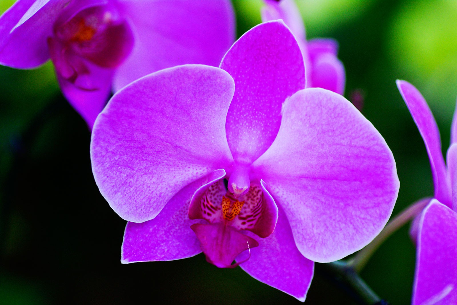 Flower meanings orchid symbolism on whats your sign flower meanings and orchid meanings mightylinksfo