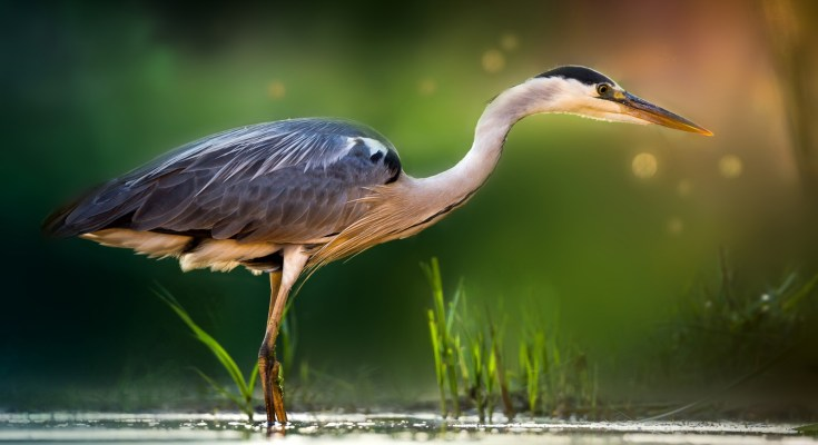 symbolic meaning of the heron
