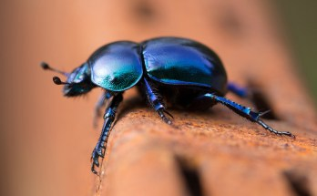 Symbolic Beetle Meaning