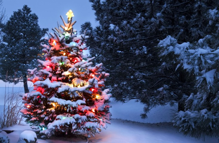 Symbolic Meaning Of The Christmas Tree On Whats Your Sign