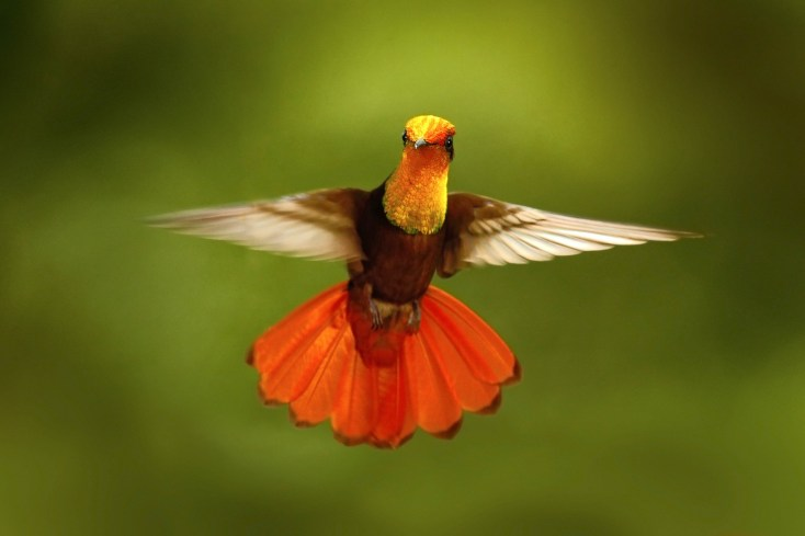 Fascinating Symbolic Hummingbird Facts On Whats Your Sign