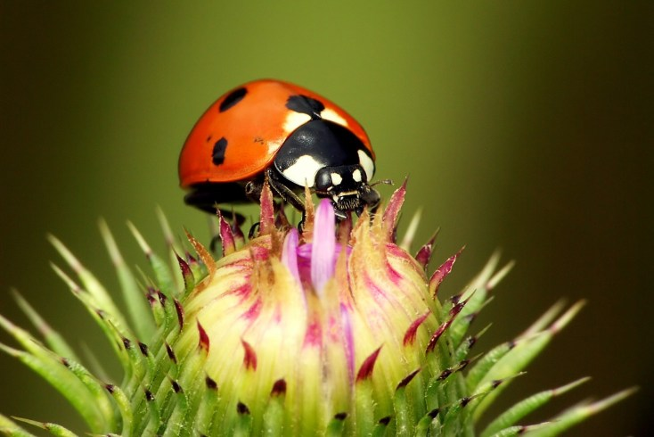 Ladybug Love Symbolism And Meaning On Whats Your Sign