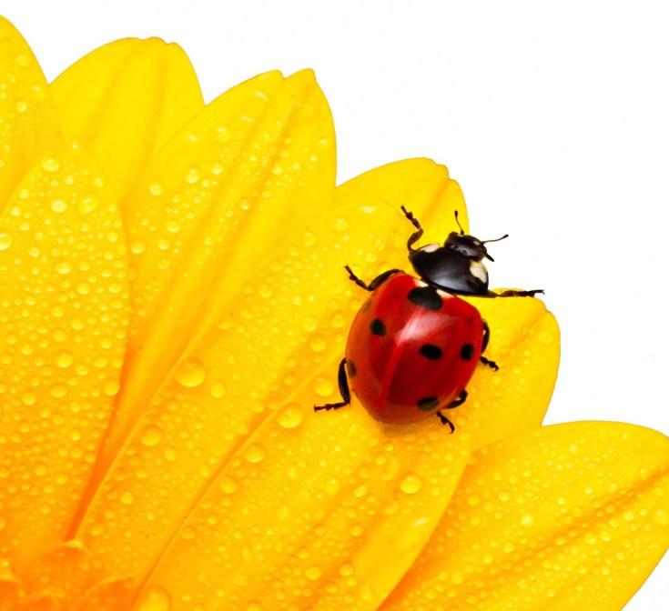 Symbolic Ladybug Tattoo Ideas And Ladybug Meaning On Whats Your Sign