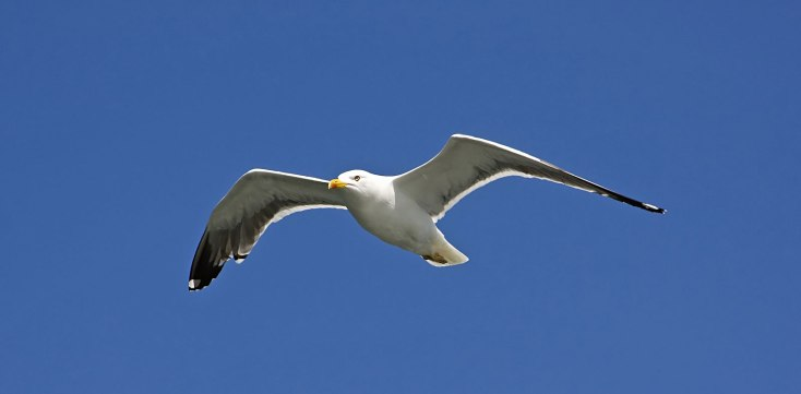Symbolic Meaning Of Seagulls On Whats Your Sign