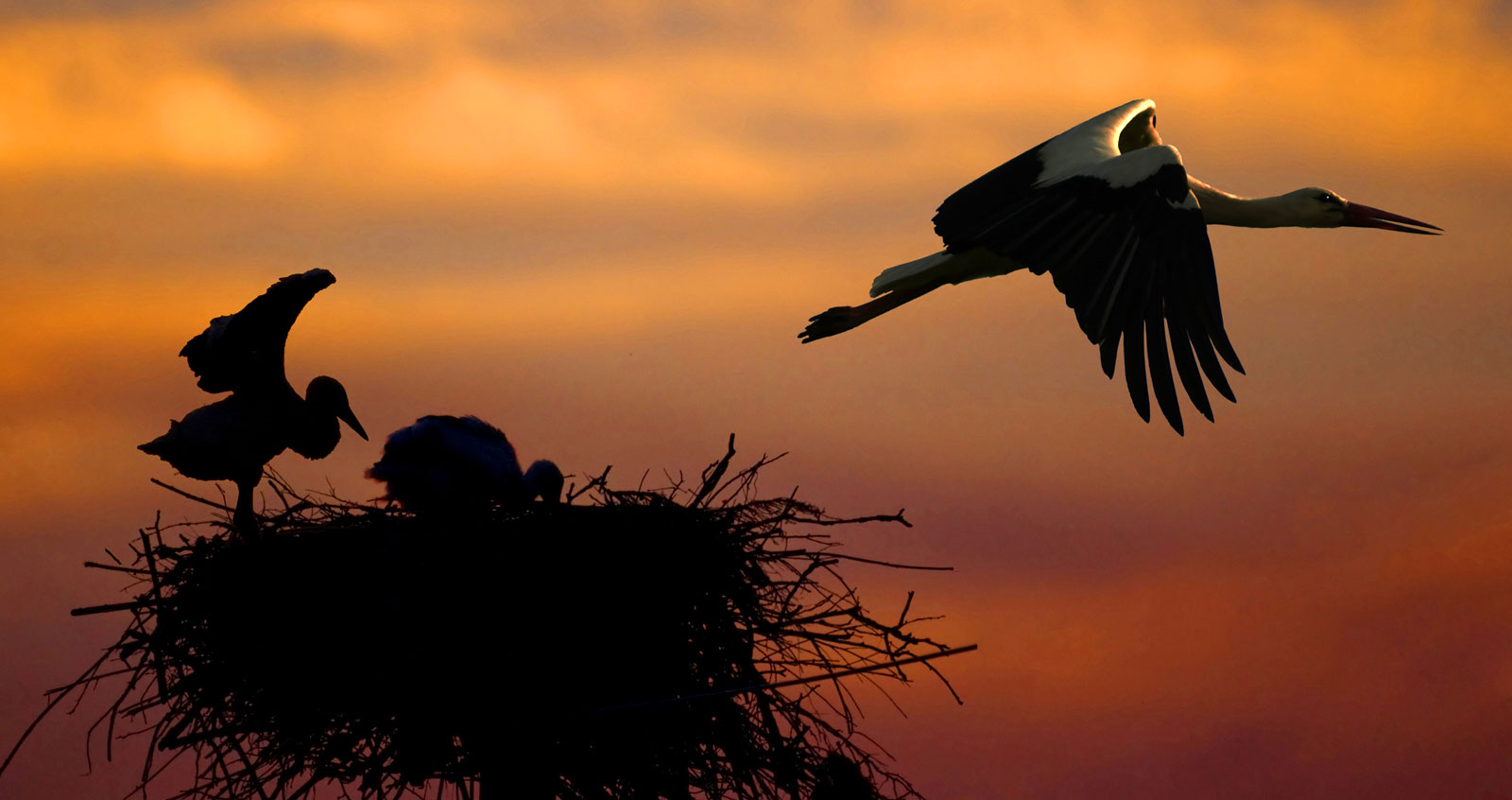 Symbolic Meaning of the Stork on Whats-Your-Sign