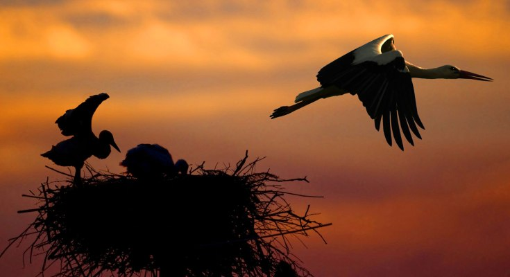 symbolic meaning of the stork