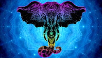 Animal Totem Meanings and Symbolism on Whats-Your-Sign com