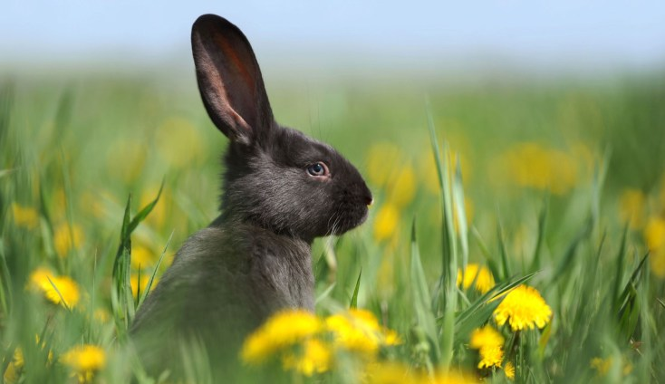Symbolic Rabbit Meanings And Rabbit Totem On Whats Your Sign