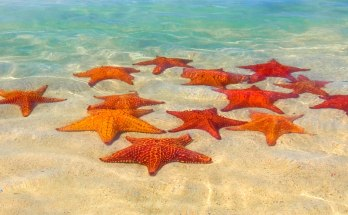 symbolic starfish meaning