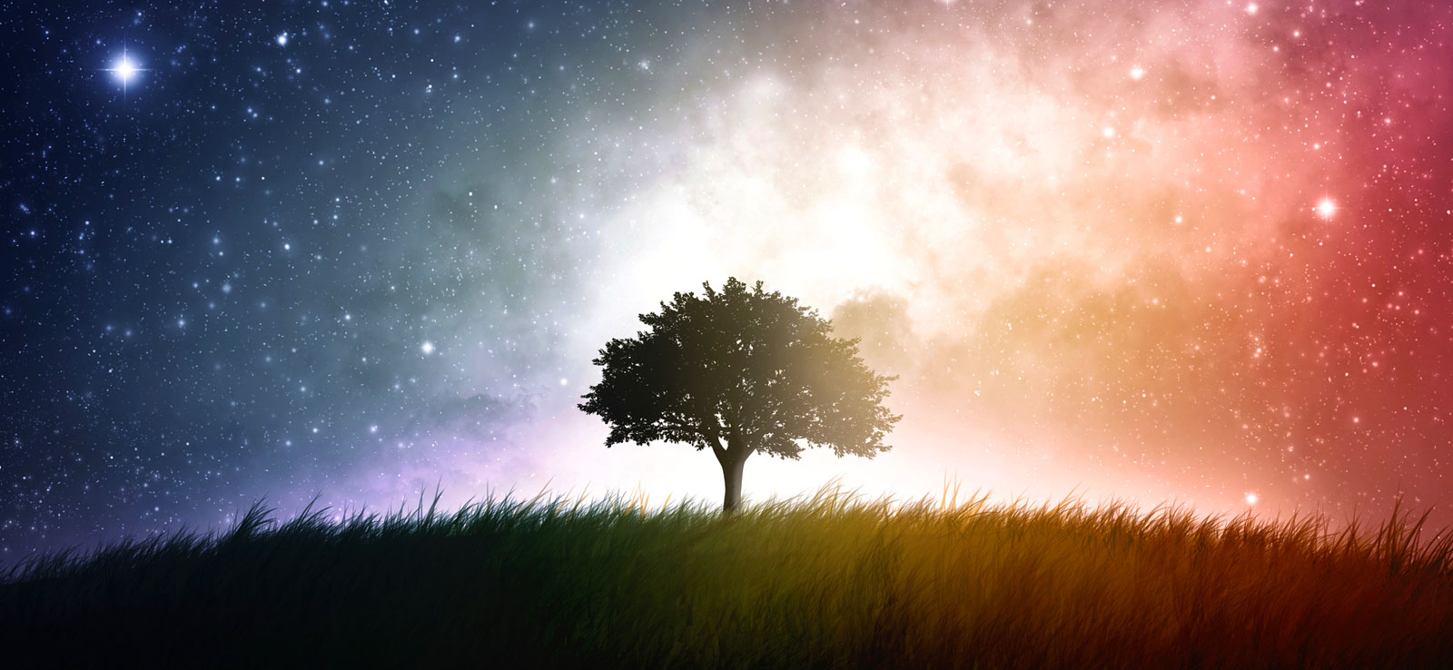 Tree Symbolism and Tree Meaning for Guidance on Whats-Your-Sign