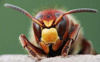 Digging Into Symbolic Beetle Meaning on Whats-Your-Sign