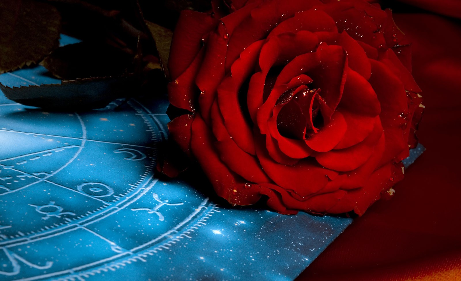 Zodiac Flower Signs and Meanings on Whats-Your-Sign