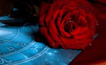 zodiac flower sign meanings