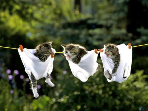 So...kittens in underwear make it okay to post a picture of underwear on my blog, right??