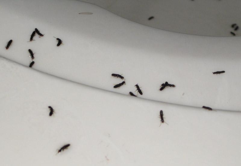 Swarming Termites Whats That Bug