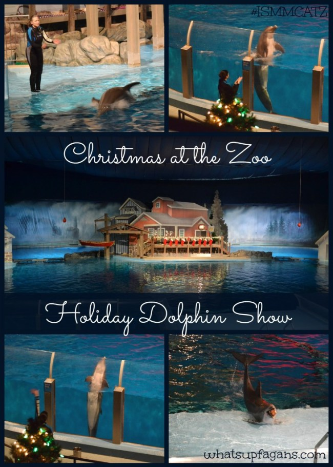 Christmas at the Zoo in Indianapolis - Holiday Dolphin Show! whatsupfagans.com #ISMMCATZ