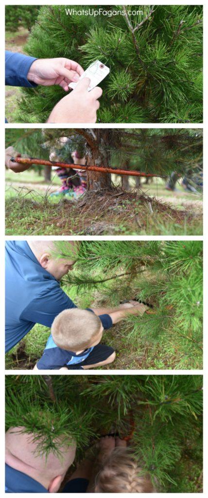 elgin-christmas-tree-farm-cutting-down-a-real-christmas-tree-as-a-family