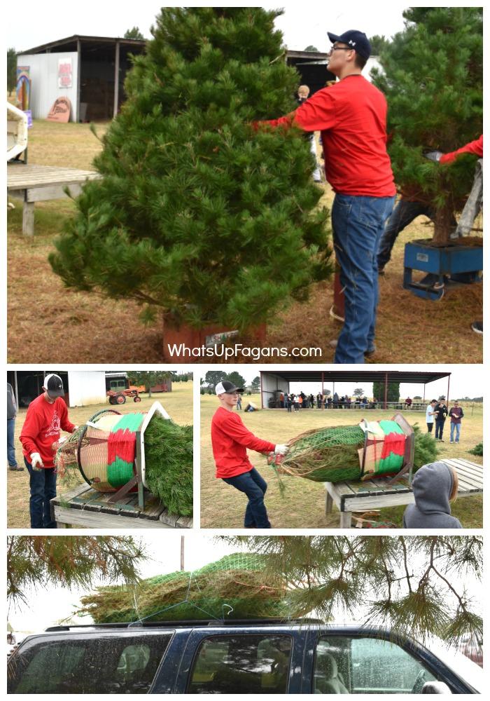 real-tree-farm-christmas-tree-elgin-christmas-tree-farm