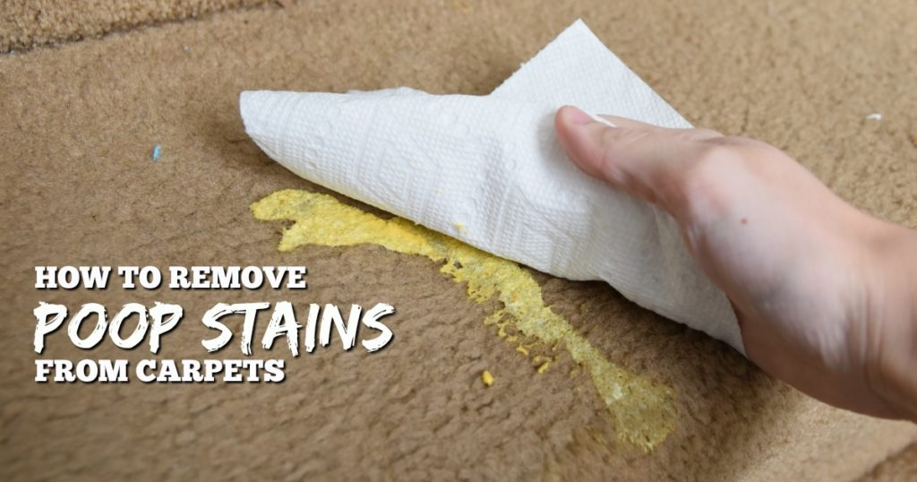 how to remove poop stains from carpet   remove diarrhea stains   human feces  carpet cleaning tutorial   cleaning tip hack   get rid of poop smell   excrement stain removal   home remedy cleaning solution   clean carpeting