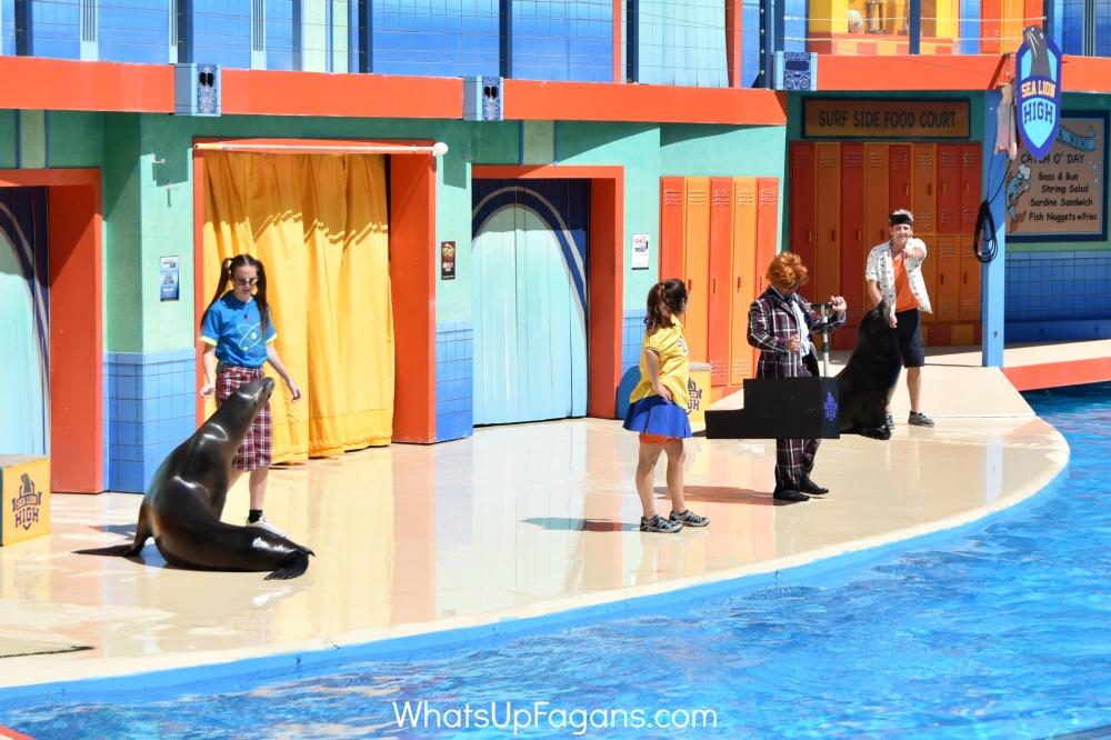 sea world sea lion show