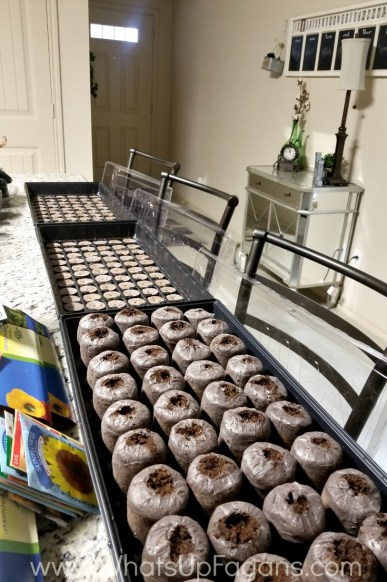 best way to grow seedlings indoors