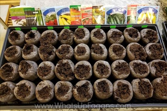 growing seedlings indoors