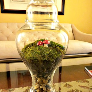 Diy moss terrarium,how to make a moss terrarium