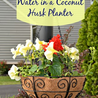how to conserve water in a coconut husk planter