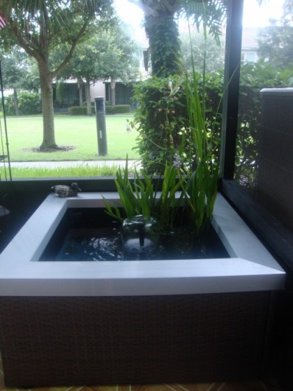 Reader Showcase   Water Garden