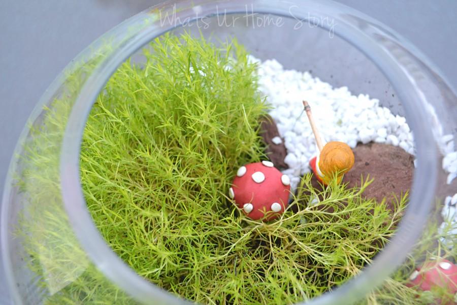 Yet Another Moss Terrarium