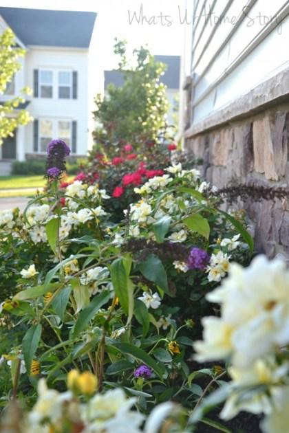 Summer Garden 2013