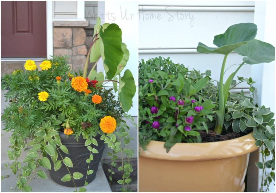 Garden Woes