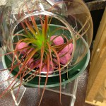 Air Plant Terrarium Ideas Whats Ur Home Story