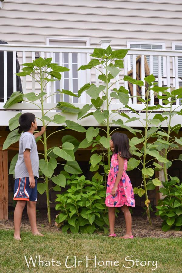 Back Yard Garden 2014
