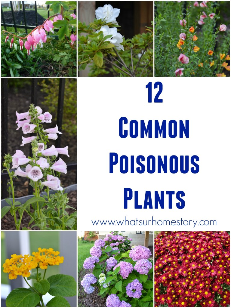 How Safe is Your Garden?