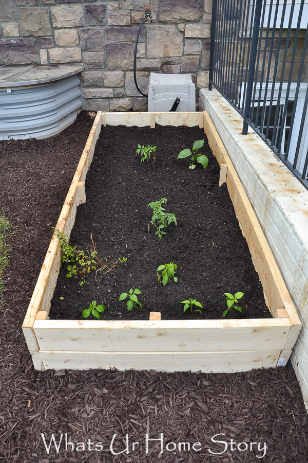 Vegetable Bed Update