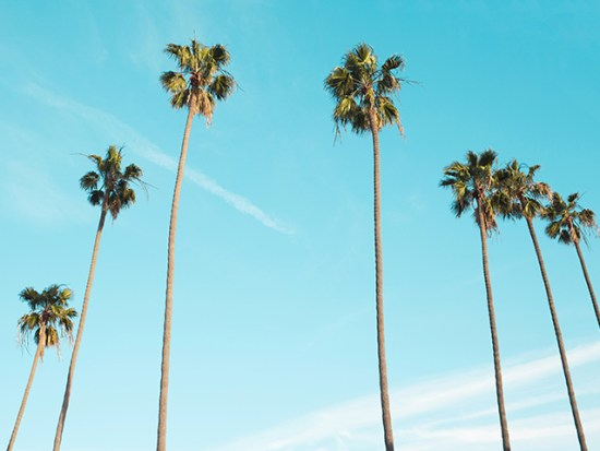 Los angeles weather and seasons - sunny palm trees