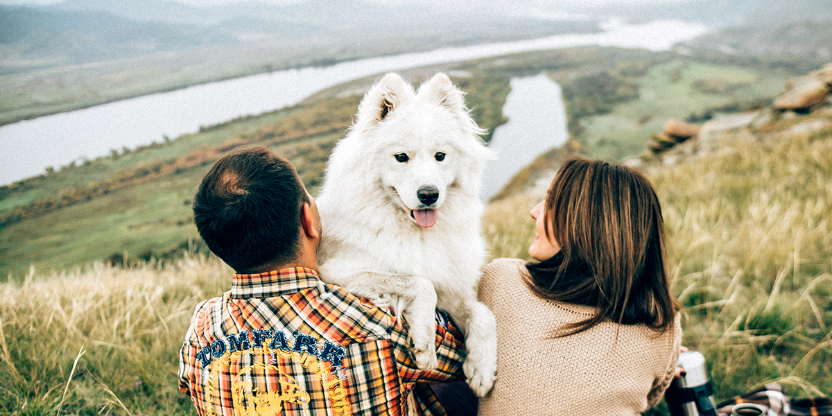 Ultimate Packing Checklist for Traveling With Your Dog.