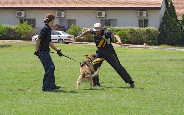 10 Principles of Successful Dog Training