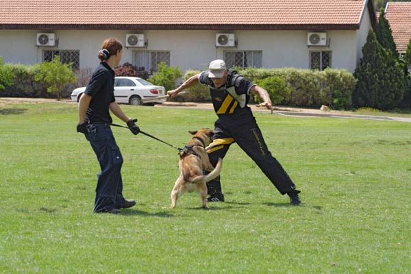 Dog Training – Your Next Step After Buying a Dog